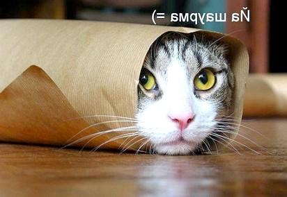 Міфи про продукти харчування кішок