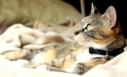 чим і як годувати вагітну кішку і кішку після пологів