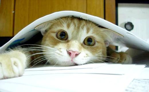 кіт у газетах
