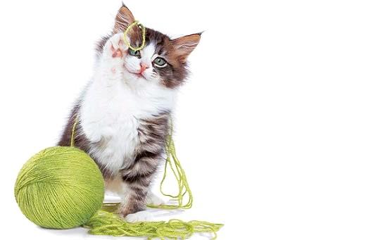 кошеня і нитки