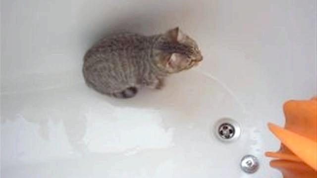 як помити кошеня