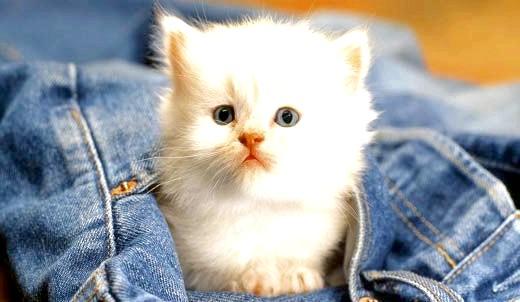 як назвати білого кошеняти