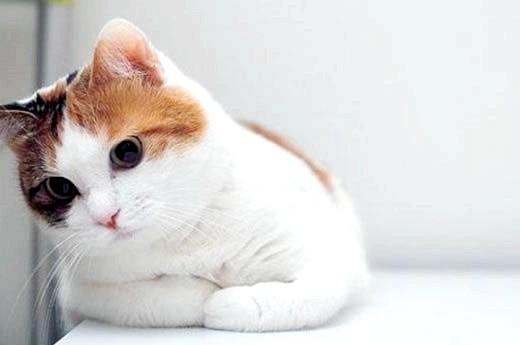 як допомогти кішці при тічці