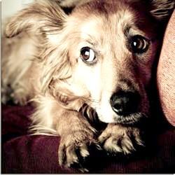 собака боиться