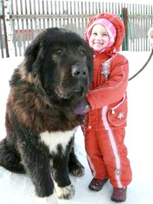 кавказька вівчарка і дитина