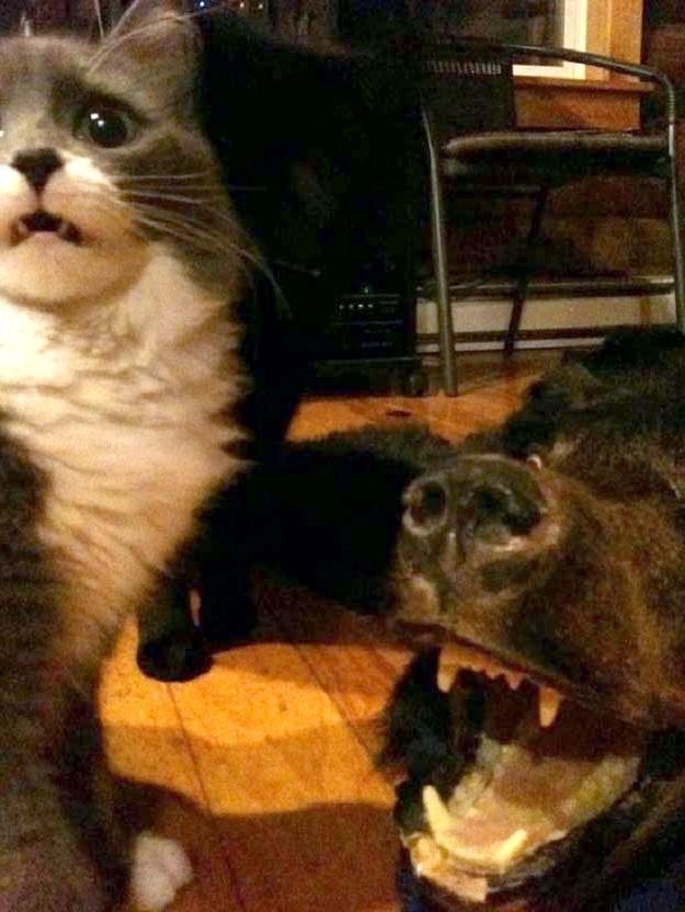 прикольний кіт і ведмідь