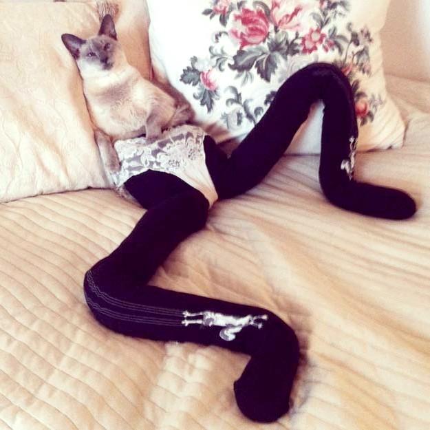 Фото смішний кішки в колготках