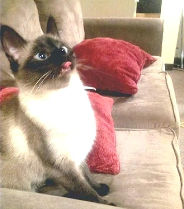 прикольне фото кішки