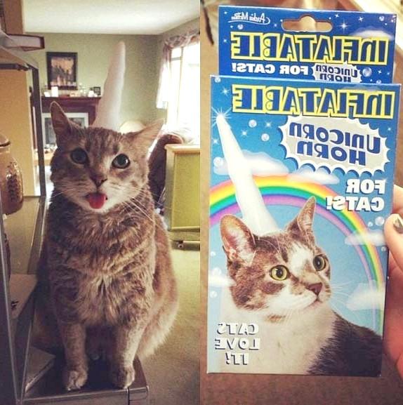 Вибирайте правильний корм для котів