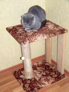 когтеточка для кішок