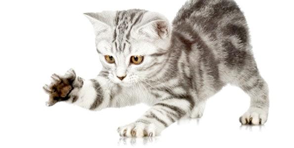треба відучувати кошенят дряпатися в дитинстві