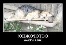собака з молотом