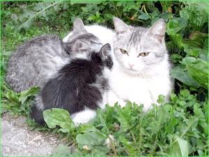 Фото - Як народжують кішки в перший раз