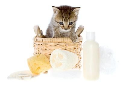 гігієнічні процедури для кошеняти