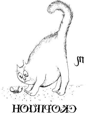 кіт скорпіон