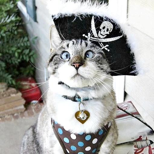 косоока кішка із США
