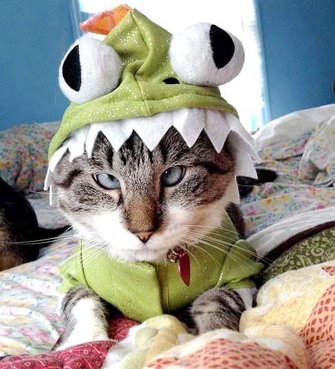 кішка в костюмі