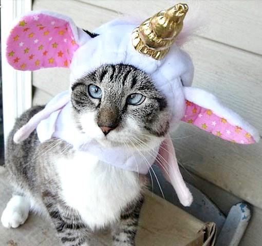 косоока кішка в шапці