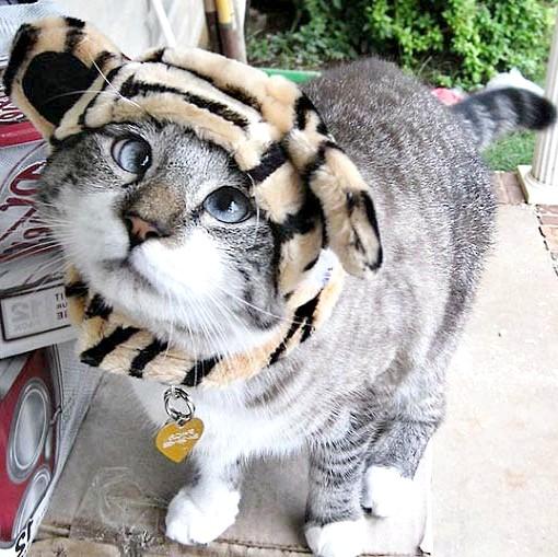 кішка-тигра