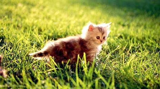 красиві імена для кішок дівчаток і котів хлопчиків