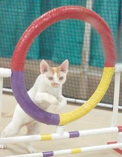 Спритність кішок