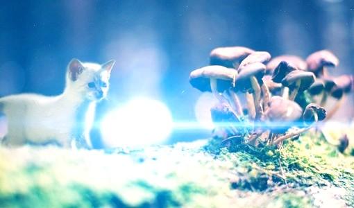 отруєння у кішок