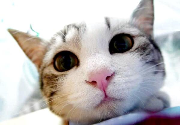 відгуки про корм для кішок кет чау (cat chow)