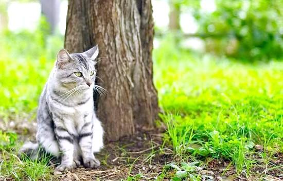 відгуки про корм для кішок проплав (Pro Plan)