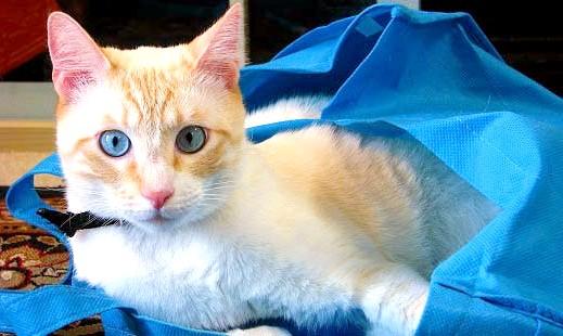 яка переноска для кішок краще