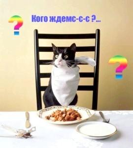 Фото - Харчування кішок - загальні поняття