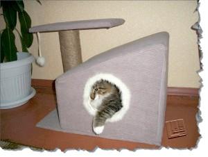 Фото - Чому кішки ховаються в будиночках