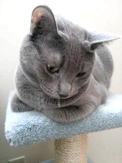 Фото - Чому у кішки течуть слюні ?!