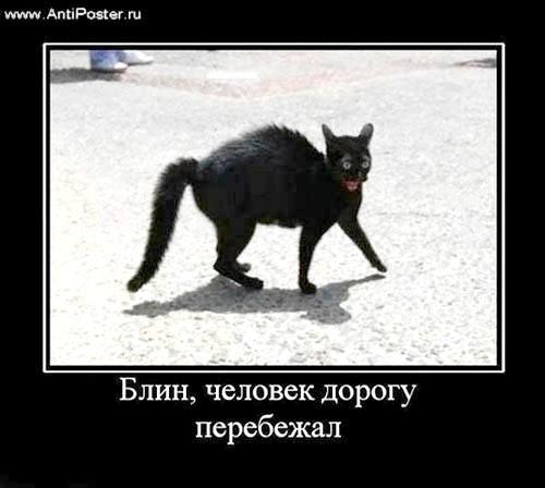 Фото - Прикмети про кішок