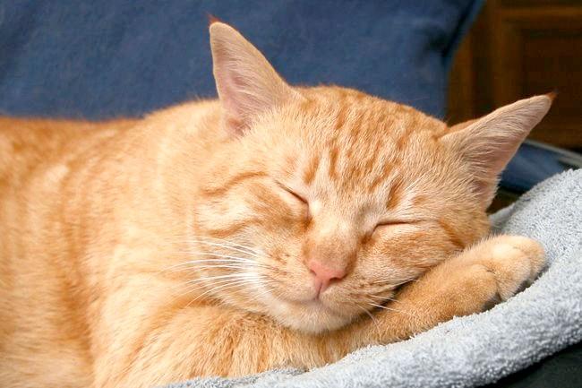 Фото - Руді кішки
