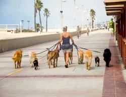 Як правильно потрібно вигулювати собаку