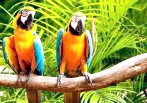 Фото - Якого папуги легше навчити говорити