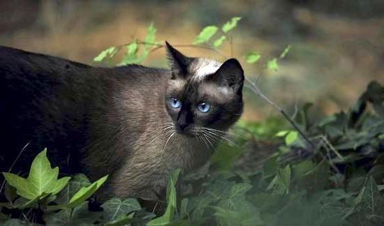 Відгуки про корм для кішок Бош Санабель