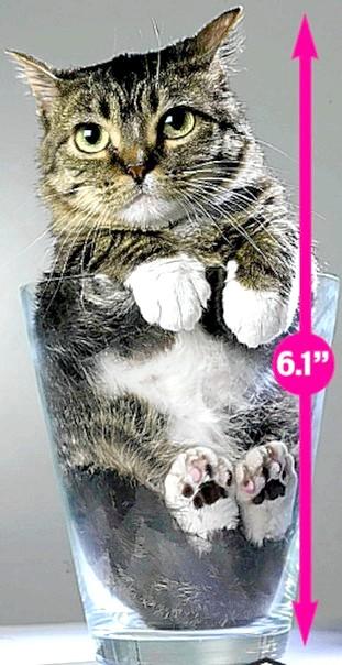 Містер Пібблз (Mr. Peebles) - найменший кіт у світі
