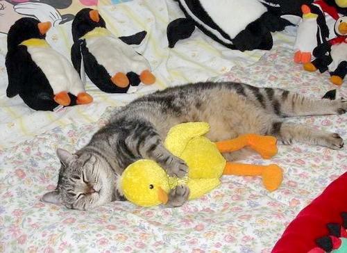Фото - Скільки часу кішка спить на добу?