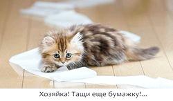 Фото - У кішки пронос, що робити?
