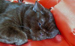 Фото - У кішки запор, що робити?