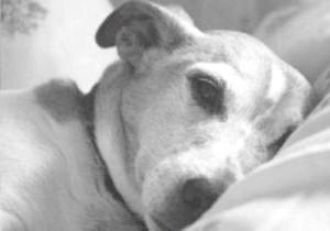 Фото - Інсульт у собак