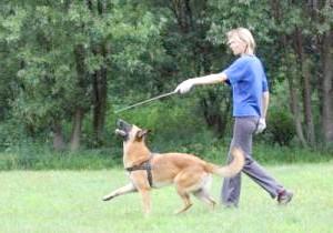 Фото - Як навчити собаку командам