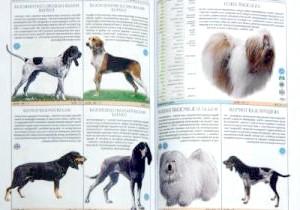 Фото - Як визначити породу собаки