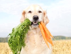 собака з морквою