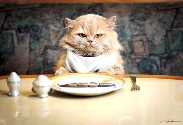 скільки разів на день годувати кішку