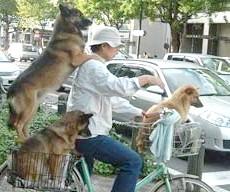 три собаки і людина на велосипеді
