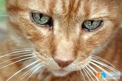 Фото - Захворювання очей у кішки