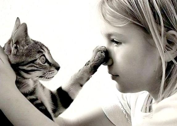 запахи відлякують кішок